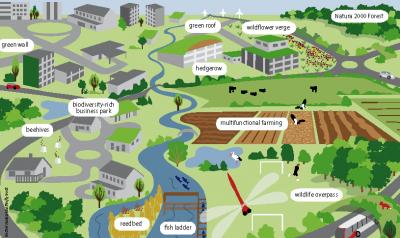 Sestavni deli zelene infrastrukture (infografika Evropskae okoljske agencije)
