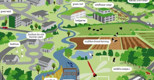 Slovarček izrazov zelene infrastrukture