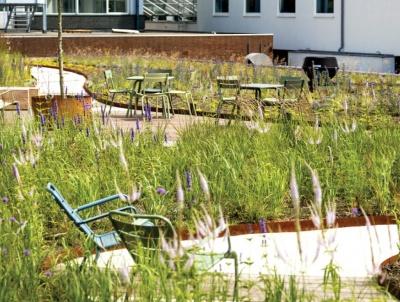 Zelena streha na vrhu pisarne Breevast, poslovno središče Zuidasu v Amsterdamu